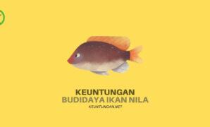 Keuntungan Budidaya Ikan Nila